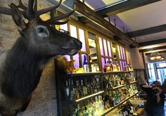 Mounted deer head on wall with bar in background